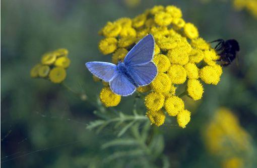 Schmetterlingsprojekt gewinnt Landesnaturschutzpreis