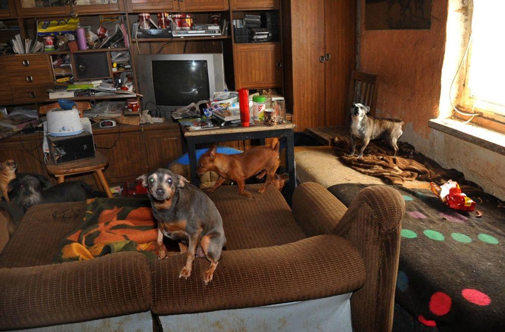 """""""Animal Hoarding"""" – das meist krankhafte Sammeln und Halten von Tieren. (Symbolbild) Foto: dpa-tmn/J. S. Pfeifer"""