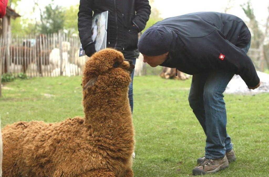 Alpaka-Trekking, warum nicht? Weitere Tipps für die Osterferien finden Sie in der Bildergalerie. Foto: Doris Matthaes