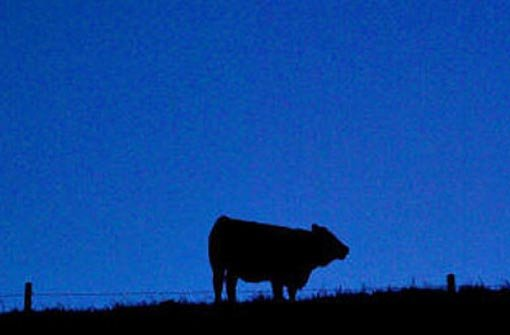 1. August: Entlaufene Rinder erschossen