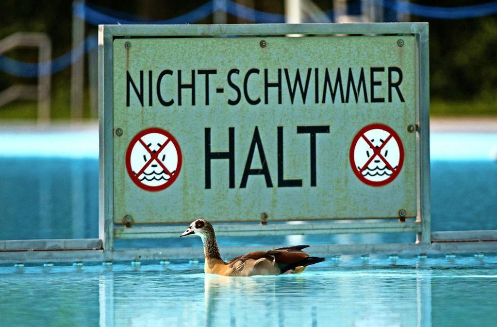 Ein Nichtschwimmer ist sie ganz bestimmt nicht: die Nilgans. Auch andernorts wie hier in Frankfurt besuchen die Wasservögel gern die Freibäder. Foto: dpa