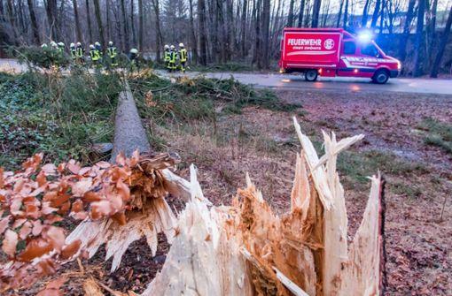 Mann stirbt bei Aufräumarbeiten im Wald