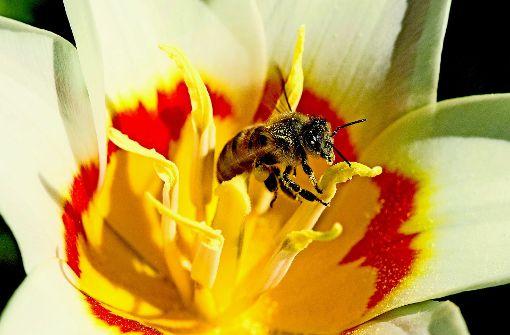 Die Bienenzucht liegt im Trend