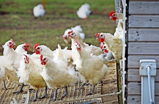 Ernste Lage bei Vogelgrippe entspannt sich