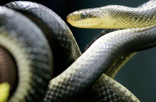 Schlange in Eisdiele sorgt für Schrecksekunde