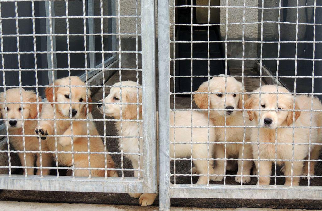 Die Hunde aus dem Tiertransporter haben inzwischen fast alle ein neues Zuhause gefunden. Foto: Tierschutzverein Stuttgart