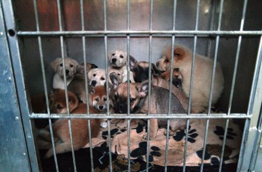 Illegaler Welpentransport mit 42 Hunden gestoppt