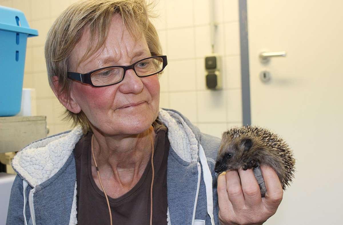 Antje Päglow, Leiterin der Tierheims Filderstadt, mit einem Babyigel Foto: Caroline Holowiecki