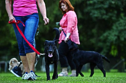 Die Hundeschule im Forst kostet extra