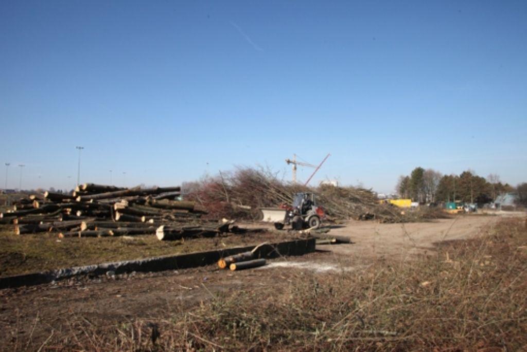 Bäume müssen weichen für den Parkplatz. Foto: Patricia Sigerist