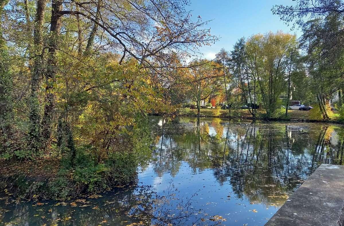 Der Riedsee hat keine gute Wasserqualität.  Das soll sich bald ändern. Foto: Jacqueline Fritsch