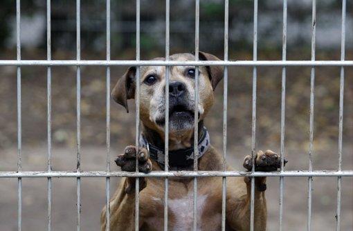 Die Aufnahme von Fundhunden ist auch ein finanzielles Problem. Foto: StZ