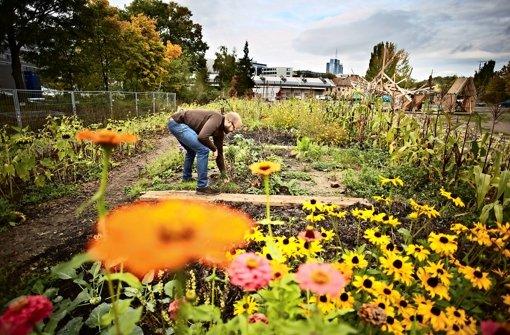 Wo einst eine Tankstelle stand, pflanzt Moritz Bellers jetzt Gemüse an. Foto: Heinz Heiss