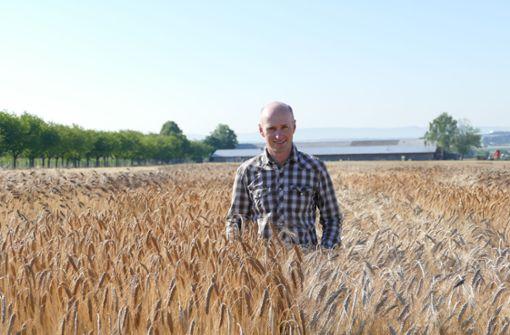 Emmer und Einkorn: Vom Feld in die Bäckerei