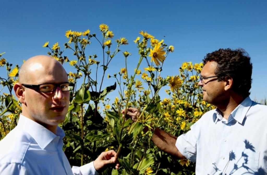 Die Energieexperten Sebastian Damm (links) und Mathias Ginter begutachten ein Silphiefeld. Diese Energiepflanze soll Mais und Raps ersetzen. Foto: Bräsel