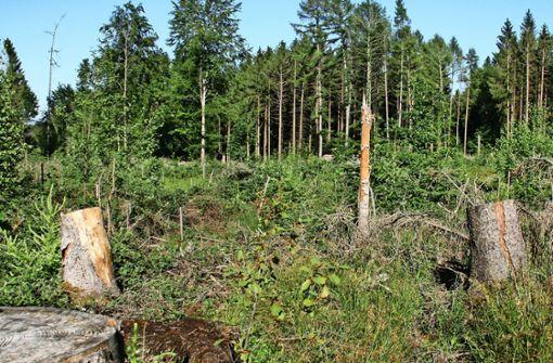 5000 Bäume für eine Kommune