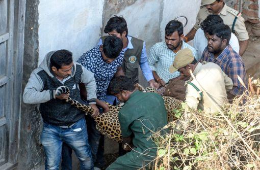 Leopard sorgt für Aufregung in südindischer Stadt