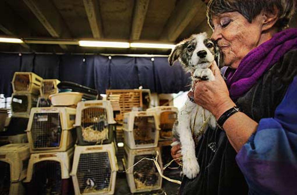 Fünfzig Hunde hat Ute Langenkamp in Kunststoffboxen von Pitesti nach Dettenhausen bringen lassen. Weitere 3500 warten auf der ehemaligen Fuchsfarm Smeura darauf, dass sie jemand adoptiert. Foto: Heiss