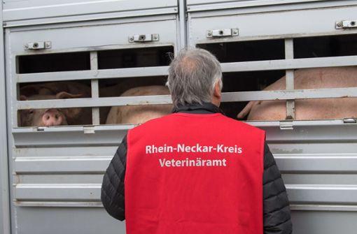 Mehr Verstöße bei Tiertransporten