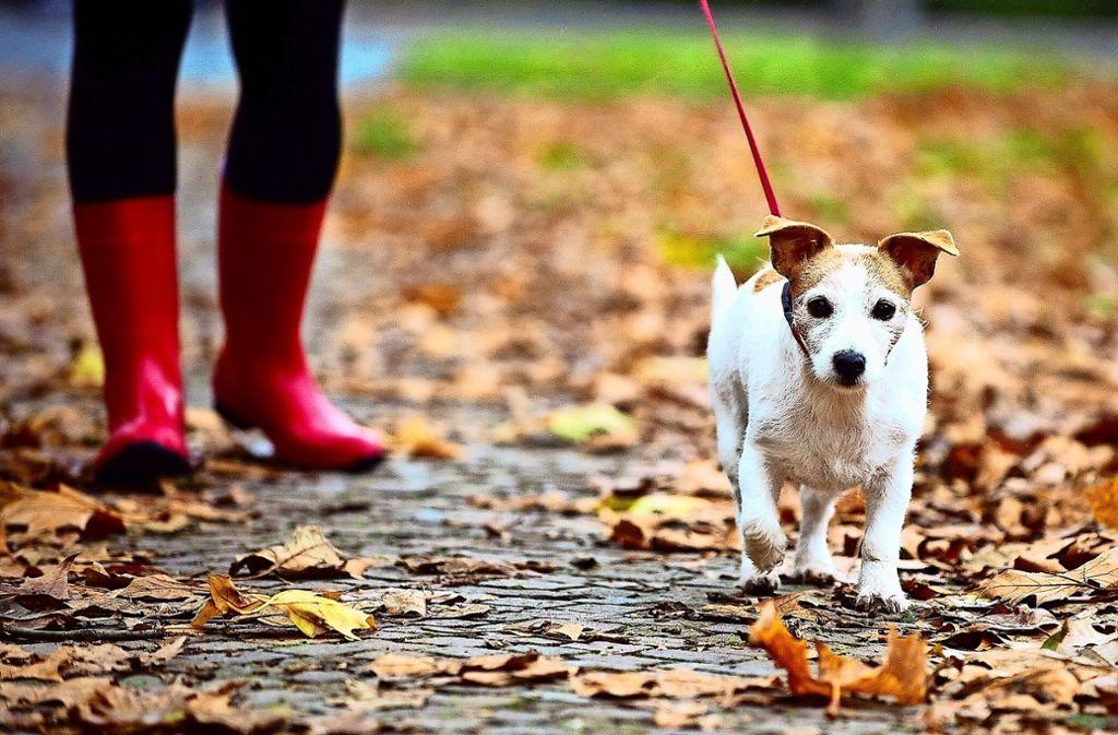 Gassi gehen ist gesund. Im Hundekot sind aber Krankheitserreger. Deshalb und weil es eklig ist, müssen Tierhalter die Hinterlassenschaften ihrer Vierbeiner  wegmachen. Foto: dpa
