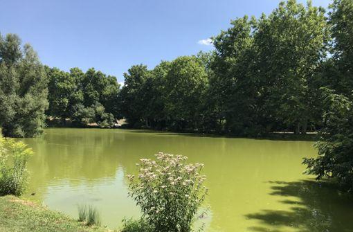 Extreme Hitze verursacht Farbenspiel am Bonatzsee