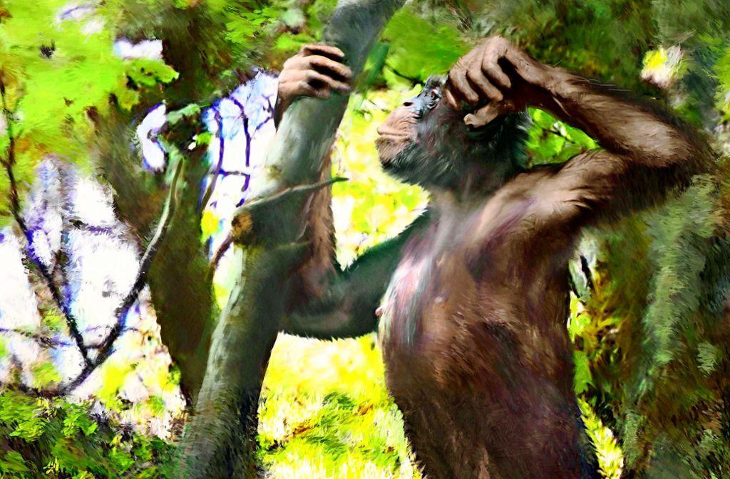 So könnte sich  Danuvius guggenmosi vor knapp zwölf Millionen Jahren durch die Bäume bewegt haben. Darauf weisen Knochenfunde wie etwa ein Wirbel (oben) oder Elle und Schienbein (Mitte) hin. Unten eine Rekonstruktion des Gesichts Foto: Uni Tübingen