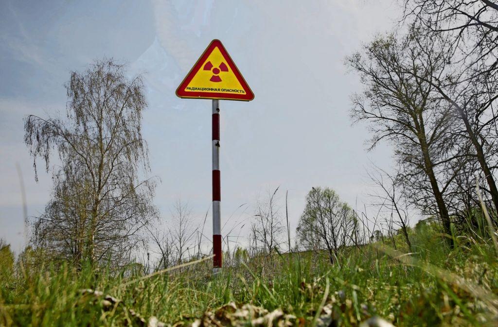 Trotz Strahlung hat sich die Vegetation um Tschernobyl gut entwickelt. Foto: dpa