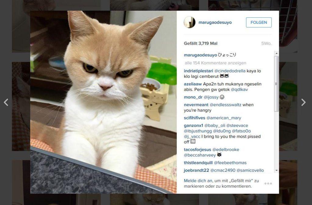 Ist Koyuki die neue Grumpy Cat? Auf Instagram und bei Twitter hat sie jedenfalls schon jede Menge Fans. Foto: Screenshot Instagram / marugaodesuyo