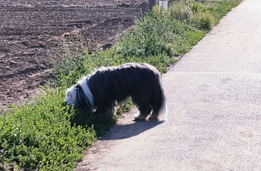 Besonders beim Gassigehen auf dem  Sepp-Herberger-Weg sorgen sich Hundehalter momentan. . Foto: Dirk Herrmann