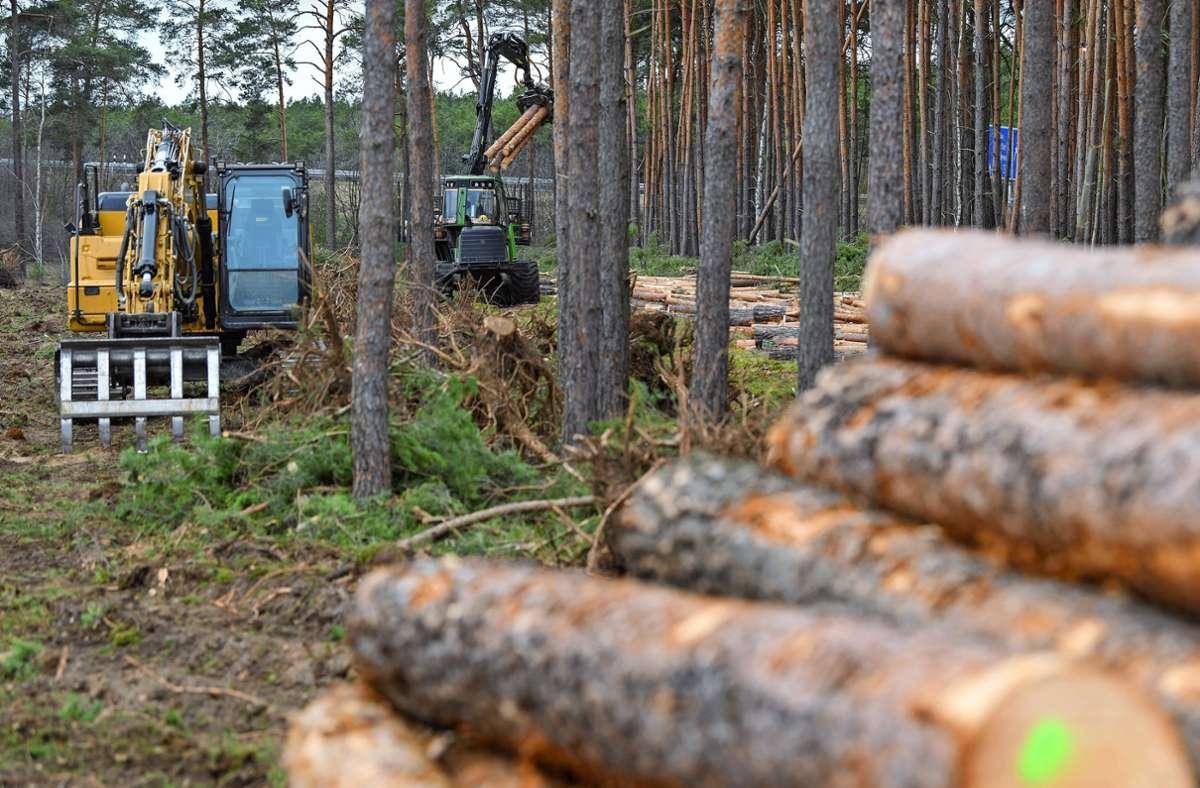 Holz als Rohstoff ist teuer geworden. Foto: picture alliance/dpa/Patrick Pleul
