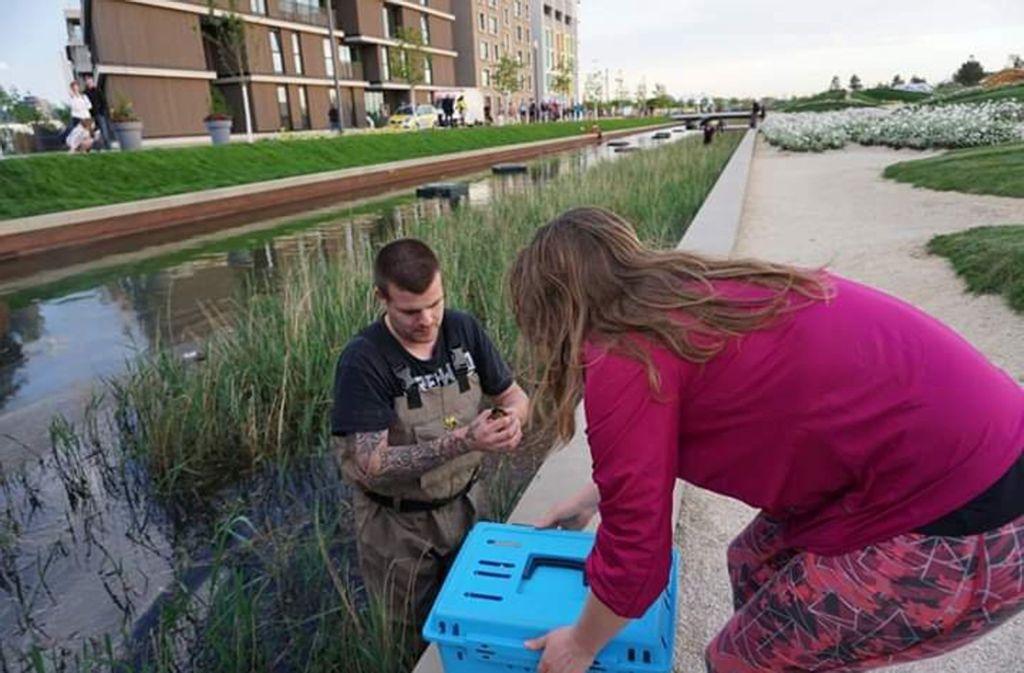 Helfer der Tierrettung Unterland retten aus dem Floßhafen auf dem Heilbronner Buga-Gelände kleine Entenbabys. Foto: privat