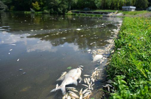 Hitze könnte Fischsterben im Südwesten verursachen