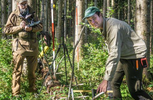 Die Vermessung des Waldes