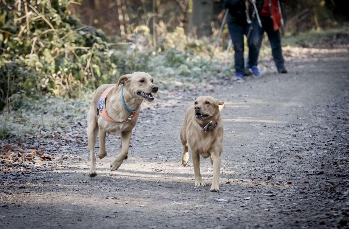 Ihre Hunde geben Frau  S. Halt (auf dem Foto sind nicht die Tiere von Frau S. zu sehen). Foto: Lichtgut/Julian Rettig
