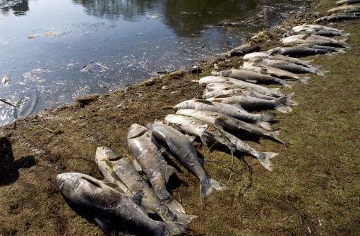 Fischsterben in der Bottwar