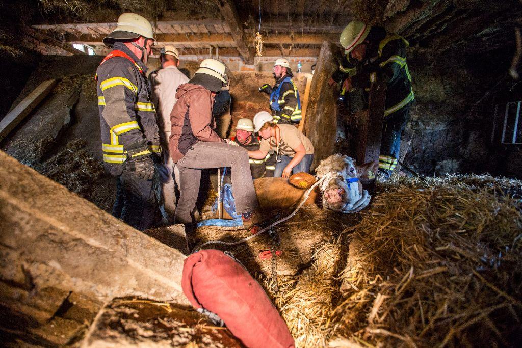Am Samstagnachmittag ist in Großerlach die Betondecke eines Kuhstalls eingestürzt und hat fünf Kühe unter sich begraben. Foto:  www.7aktuell.de | Simon Adomat