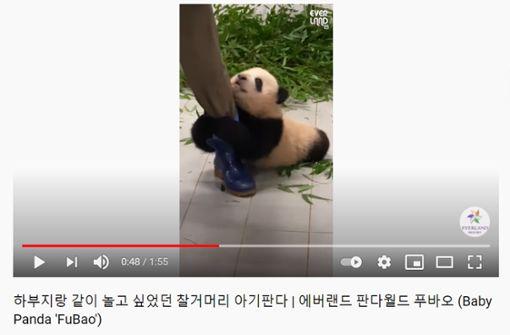 Video von Riesenpanda-Baby wird zum Youtube-Hit