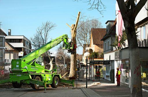23 Bäume müssen weichen