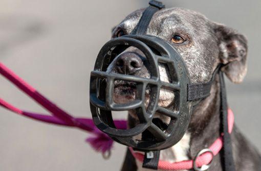 Hundeattacken im Südwesten nehmen weiter zu