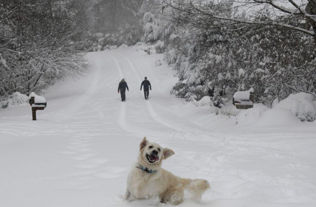Mit oder ohne vierbeinige Begleiter: Dick  eingepackt tut eine Wanderung  im Winter gut. Foto: AP