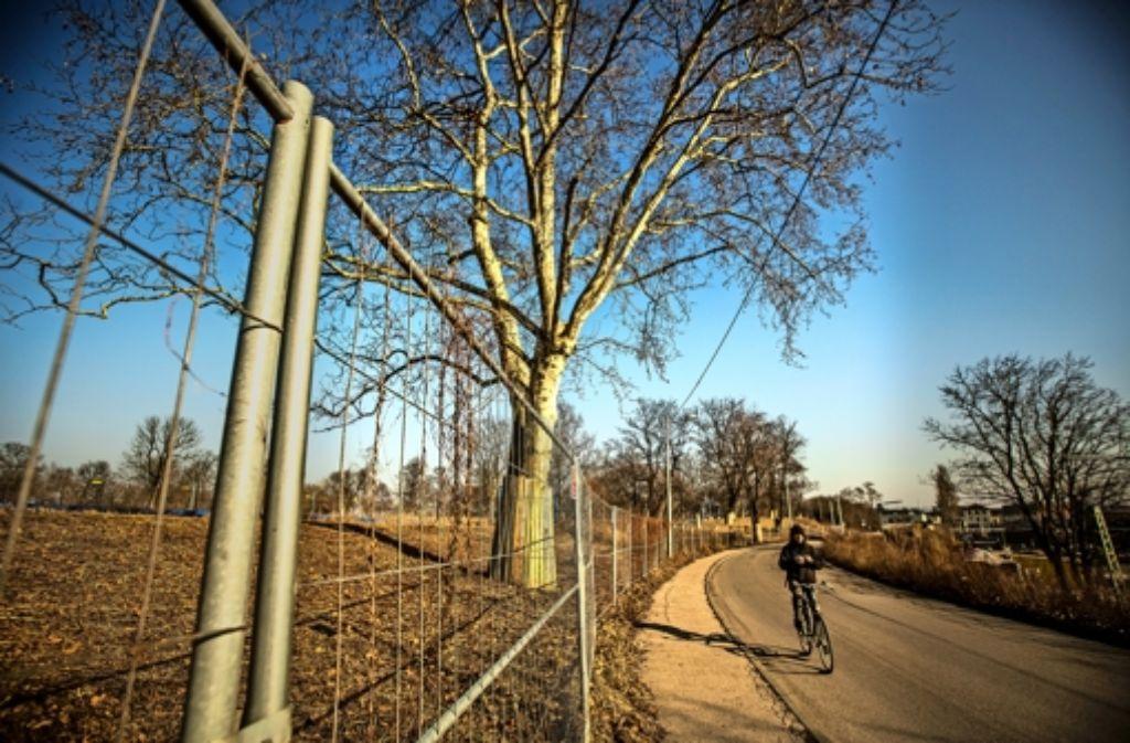 Für die Verlegung der Ehmannstraße müssten Bäume gefällt werden – was der Bahn aber verboten ist. Nun sucht sie nach alternativen Bauweisen. Foto: Lichtgut/Leif Piechowski