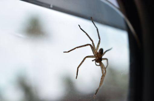 Wohl von Spinne abgelenkt - Autofahrerin baut Crash