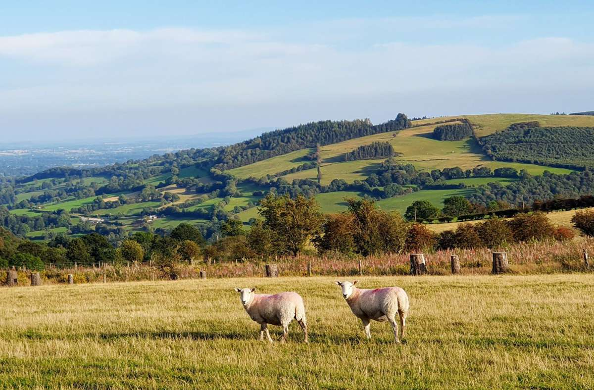 Das Dschungelcamp zieht um: Statt australischem Dschungel gibt es bald Schafe in Norden von Wales. Foto: dpa/Alexandra Frank