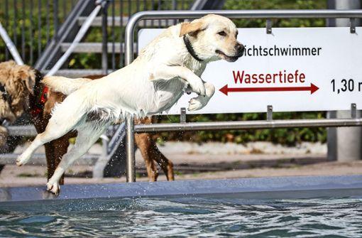 Kein  Hundeschwimmen im Inselbad