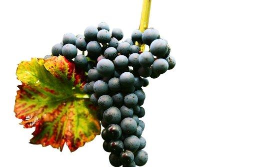 Die Trauben sind im Keller, die 2012er-Weine reifen. Foto: dpa