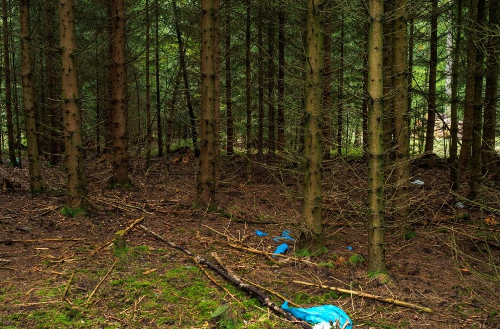In diesem Waldstück wurd eim Juli diesen Jahres Skelettteile der vermissten Peggy gefunden. Nicht nur in diesem Fall wollen Ermittler nun den Faden wieder aufnehmen. Foto: dpa