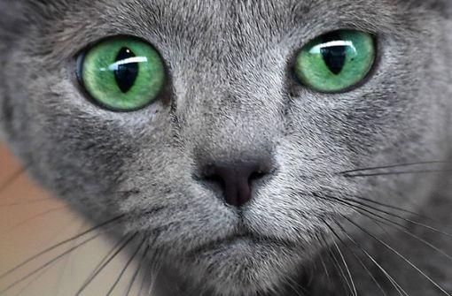 Katze mit Armbrustpfeil angeschossen