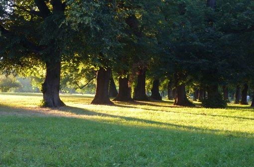 Noch keine Arbeiten im Rosensteinpark