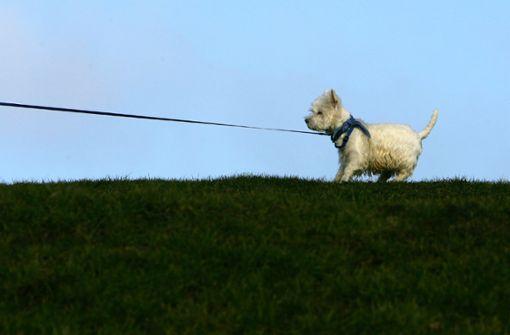Unberechenbare  Hunde,  aggressive Radler und Jogger
