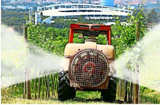 Wengerter fürchten Pestizidverbot